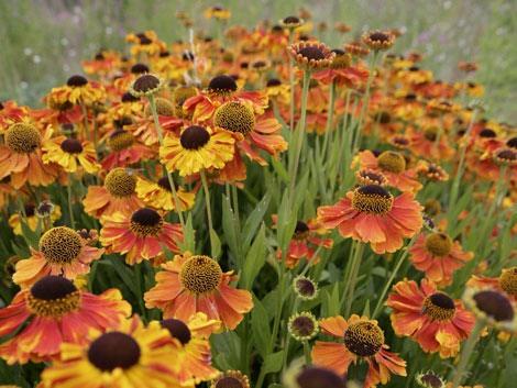 Home mynd hardy plants - Hardy houseplants ...
